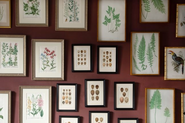 Wall of antique nature prints
