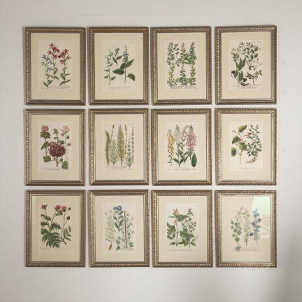 Set of 12 engravings by Johann Weinmann